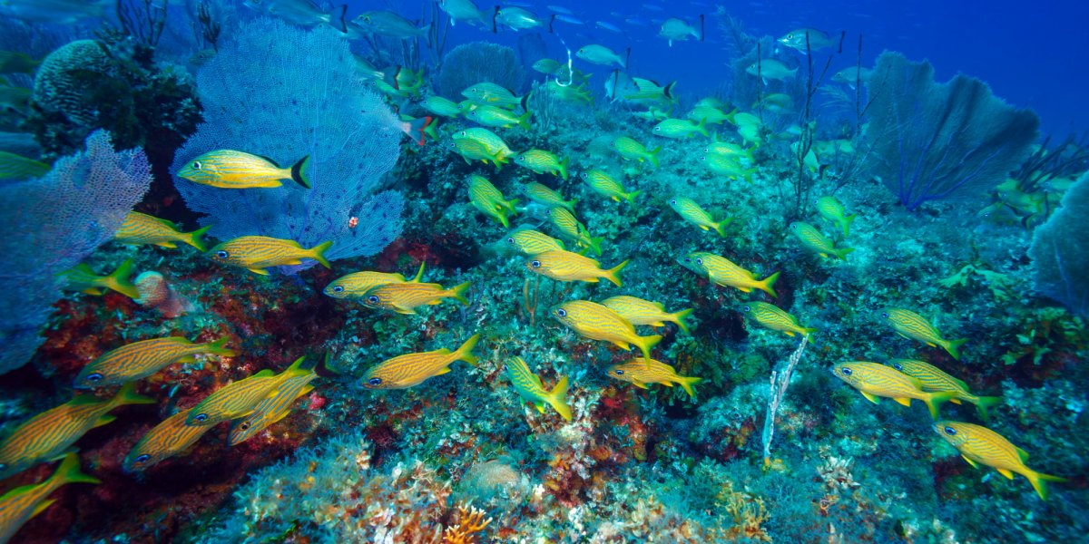 undwater shot of the cayo largo reef in cuba