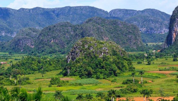 Cuban Reforestation